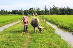 Dân nghèo 'oằn mình' nộp phí đồng cỏ cho trâu bò