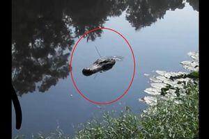 Cá sấu 'phiên bản lỗi' tung tăng dưới nước khiến nhiều người 'thất kinh'