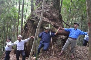 Huyện Tây Giang kỷ niệm 15 năm tái lập