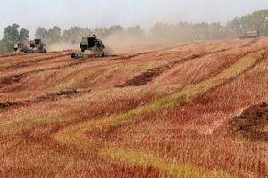 Nga muốn cho Trung Quốc thuê đất nông nghiệp, giới chuyên gia nghi ngờ