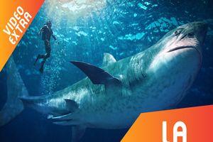 Cá mập tí hon ra sao so với tổ tiên của chúng?