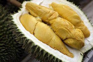 Sầu riêng ngoại nhập giá 1,5 triệu đồng/kg, người sành ăn lùng tìm mua để bõ cơn ghiền