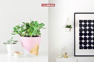 Ý tưởng đơn giản cho những chậu cây 'thổi' không khí tươi trẻ và hiện đại cho căn phòng