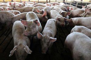 Hàn Quốc siết chặt kiểm tra thực phẩm từ Trung Quốc