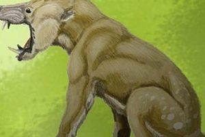 Điểm danh những loài động vật 'kỳ dị' từng thống trị Trái Đất