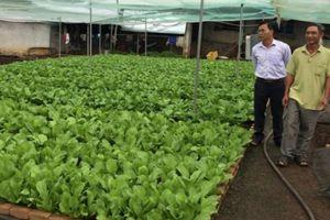 Làm giàu ở nông thôn: Chỉ trồng rau thôi, tôi thu 25 triệu/tháng