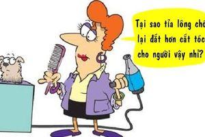 Tối cười: Lý do tỉa lông chó đắt hơn cắt tóc cho người