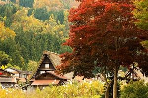 Ghé xứ sở mặt trời mọc nhất định phải ngắm cho đã mắt làng cổ Shirakawa và Gokayama