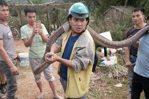 Rùng mình cảnh tay không bắt rắn hổ mang dài 4m