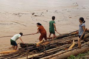 Thanh Hóa: Bất chấp nguy hiểm, người dân ra ven sông Mã vớt củi