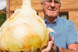 Đào được củ hành tây siêu 'khủng' gần 5 kg, đủ cho cả 30 người ăn