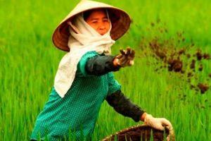 Nông sản sẽ 'sạch' hơn nhờ Nghị định nông nghiệp hữu cơ