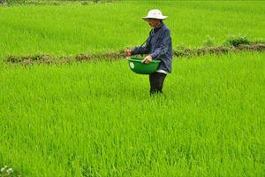 Kỹ thuật bón thúc NPK Ninh Bình cho lúa xuân
