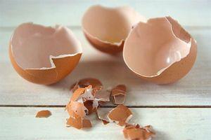 Công dụng chữa bệnh bất ngờ từ vỏ trứng gà