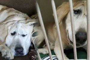 Chú chó bị bỏ rơi vì 'xấu ma chê quỷ hờn' được nhận nuôi và cái kết bất ngờ