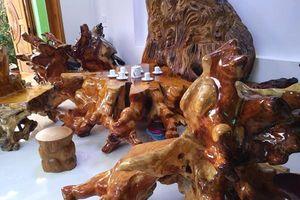 Đại gia Quảng Nam 'khoe' bộ bàn ghế gỗ sưa ngàn năm tuổi