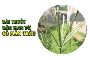 6 bài thuốc dân gian từ cỏ mần trầu nhất định phải lưu lại khi cần áp dụng ngay
