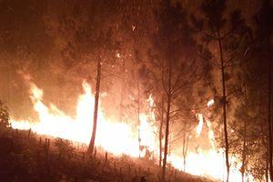 Cháy rừng xảy ra ở vài nơi, báo động đỏ tại Bắc bộ và Trung bộ