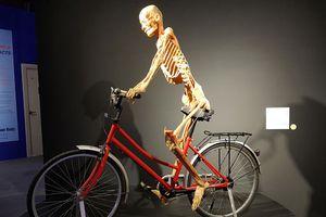 Không thể trưng bày đại chúng triển lãm nội tạng và thi thể người