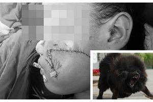 Khám phá sửng sốt ít ai ngờ về chó ngao Tây Tạng