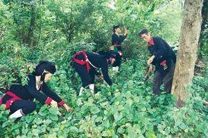 Chuyện về người Dao cùng làng thuốc nam dân tộc