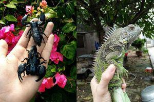 Rùng mình với bộ sưu tập 12 thú cưng 'độc lạ' của 10x Khánh Hòa