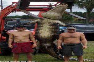 Cá sấu 'quái vật' xuất hiện, hai người đàn ông vật lộn không ngừng