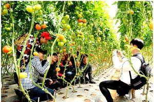 Cận cảnh vườn rau hữu cơ 'lạ và độc đáo' ở Đà Lạt
