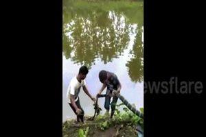 Ấn Độ: Hổ mang chúa dài 4m nhận bài học đau đớn vì tham ăn