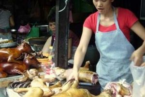 Dự kiến cấm bán thịt chó ở nhiều quận nội thành Hà Nội từ 2021