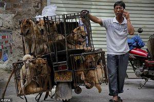 Chỉ vận động, không cấm kinh doanh thịt chó