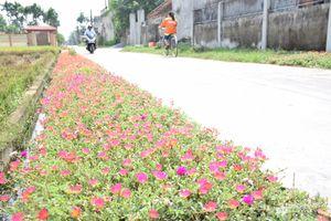 Những con đường hoa tuyệt đẹp ở Diễn Châu