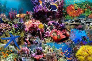 Đại dương: Từ Khoa học đến Hành động