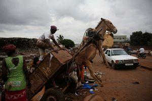 Mali: Những con lừa đang trên chiến tuyến chống lại rác thải tại thủ đô Bamako