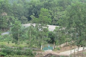 Hà Tĩnh: Trang trại nuôi lợn nằm trong khu dân cư