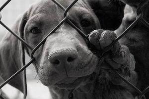 Hạ viện Mỹ thông qua Đạo luật cấm buôn bán thịt chó mèo 2018