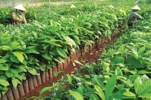 Nông nghiệp chủ trương hút doanh nghiệp nội