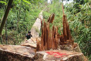 Cách các chức vụ đảng đối với giám đốc rừng phòng hộ Nam Sông Bung