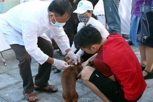 Hà Nội có trên 1.000 điểm kinh doanh và giết mổ chó, mèo