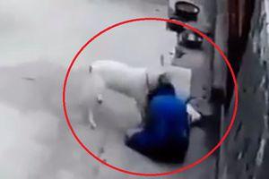 Clip: Bé gái bị chó nhà điên cuồng tấn công, quằn quại kêu cứu