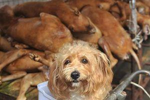 Hà Nội vận động không ăn thịt chó: Người dân ủng hộ hay phản đối?