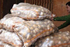 Bảo vệ nông sản Đà Lạt hay 'ngăn sông cấm chợ'?