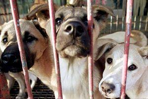 Làn sóng bài thịt chó từ Mỹ, Anh, Hàn Quốc đến Đông Nam Á