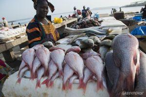 Gambia và nỗi lo sợ sau khi 'trải thảm' mời Trung Quốc đầu tư