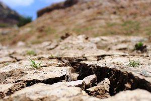 14 hồ chứa tại Ninh Thuận đang ở mực nước chết, người dân đối mặt hạn hán gay gắt