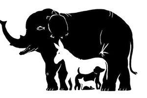 Câu đố: Bạn đếm được bao nhiêu con vật trong hình? Trên 10 con bạn đúng là 'thánh soi'