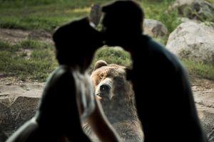 Xuất hiện 'người thứ 3' trong bức ảnh cưới khiến cô dâu, chú rể cười bò