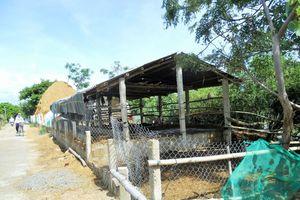 Tuy Phước (Bình Định): Dân lấn chiếm đê Đông xây dựng công trình trái phép