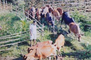 Người cựu chiến binh dân tộc Cơ Tu cần mẫn làm trang trại tổng hợp