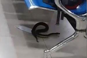 Clip: Rắn đen làm náo loạn sân bay Philippines